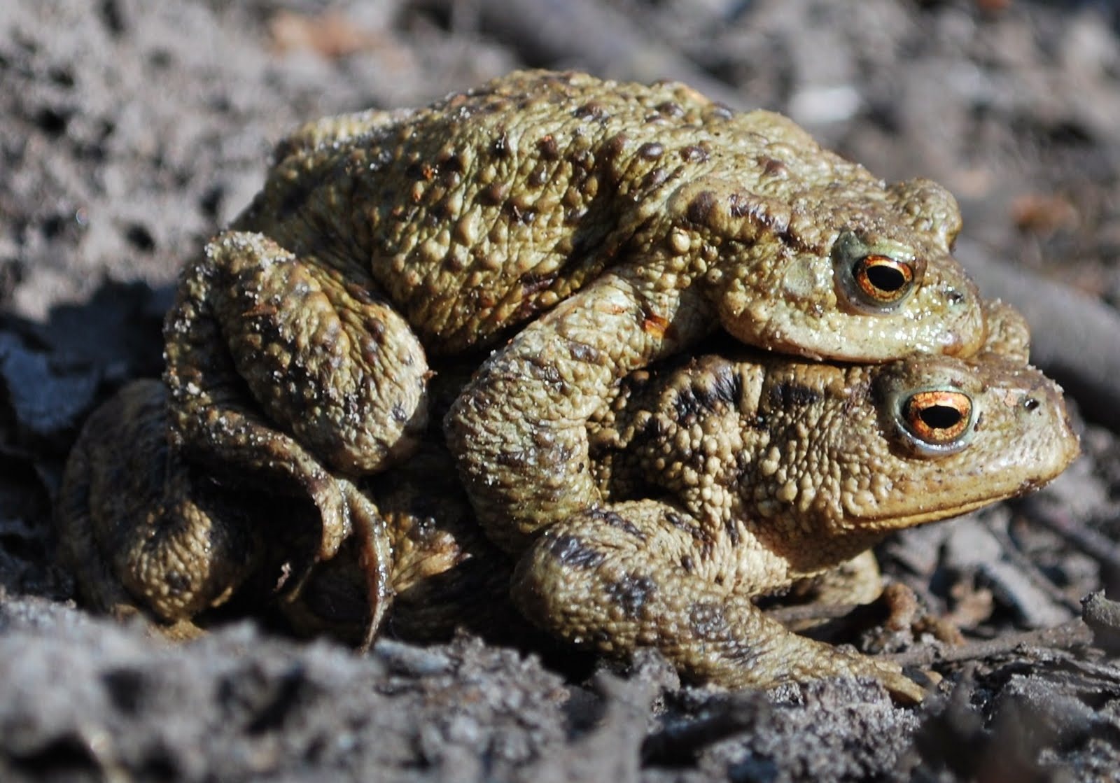 Toad for Oracle Download Which edition is right for you