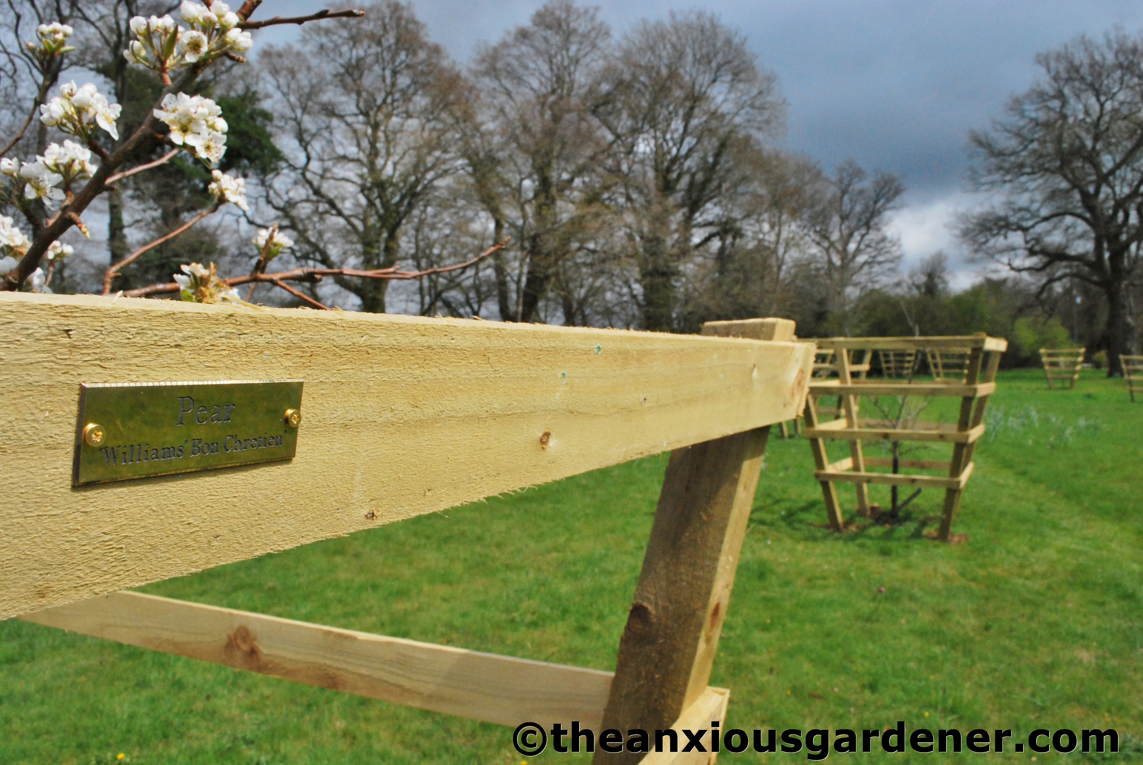 how to make a wooden tree guard