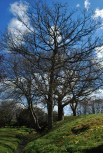 Oak and hornbeam