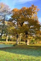 Priory oaks