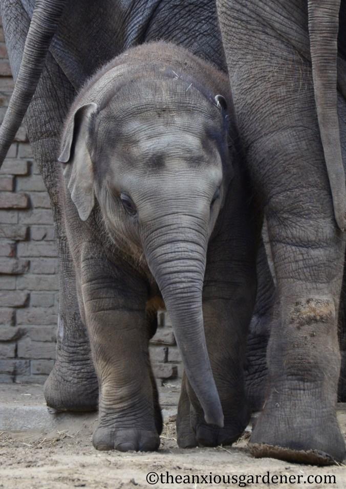 babyelephant03