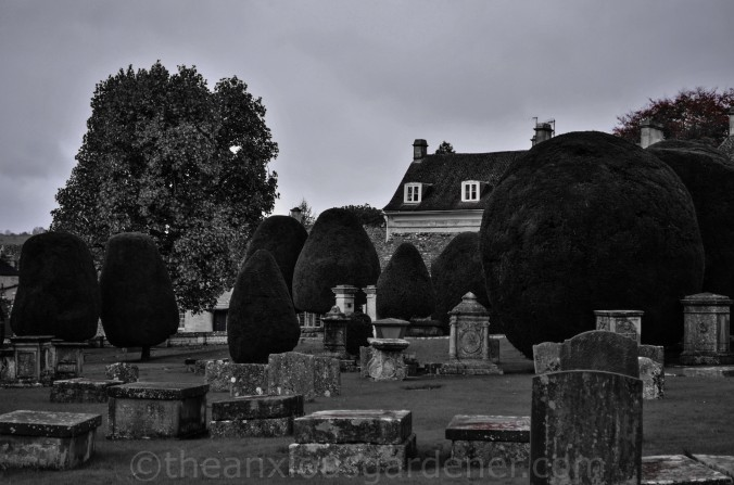 Painswick Yew Trees (3)