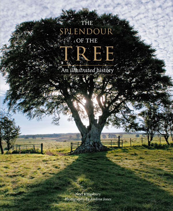 The Splendour of the Tree
