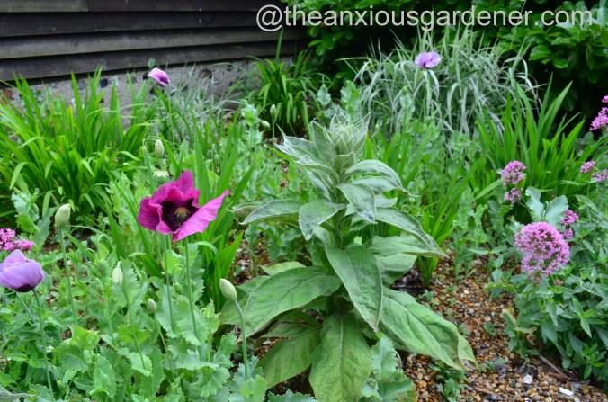 Gravel garden (12)