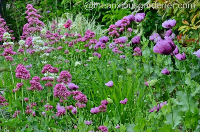 Gravel garden (5)