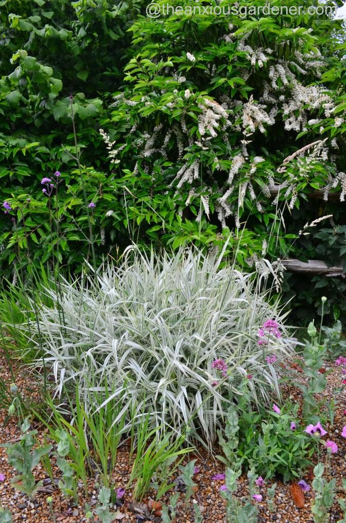 Gravel garden (8)