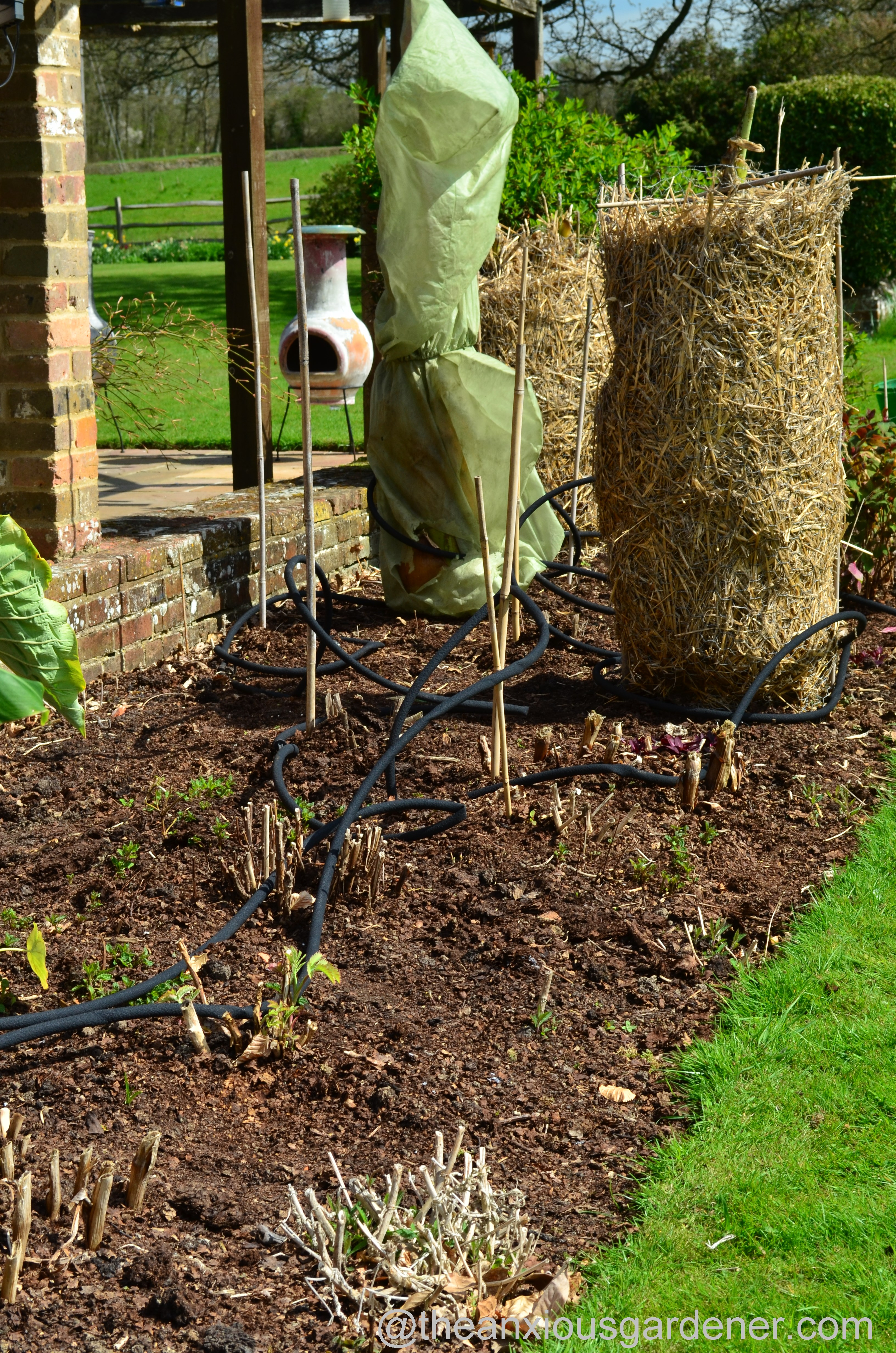 Dahlias   The Anxious Gardener   Page 2