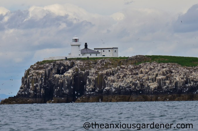 Farne Islands (1)