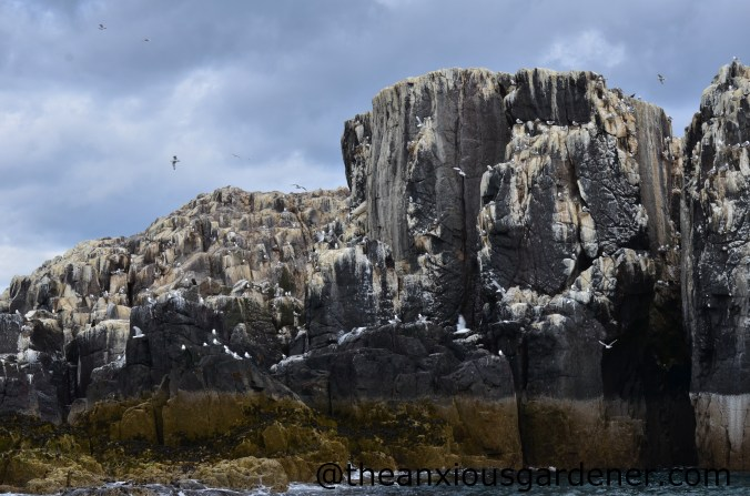 Farne Islands (3)