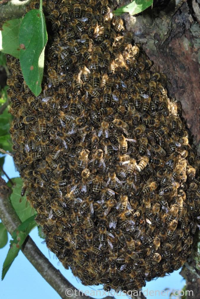 Bee Swarm (1)