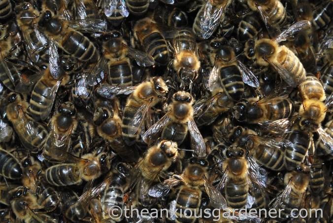 Bee Swarm (2)