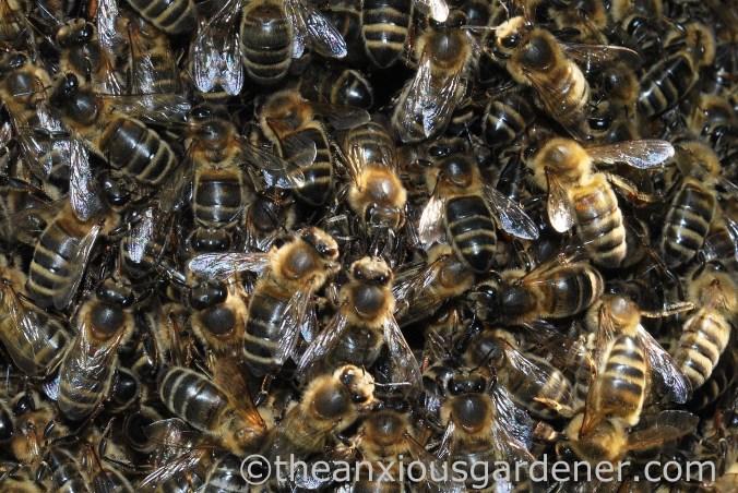 Bee Swarm (3)