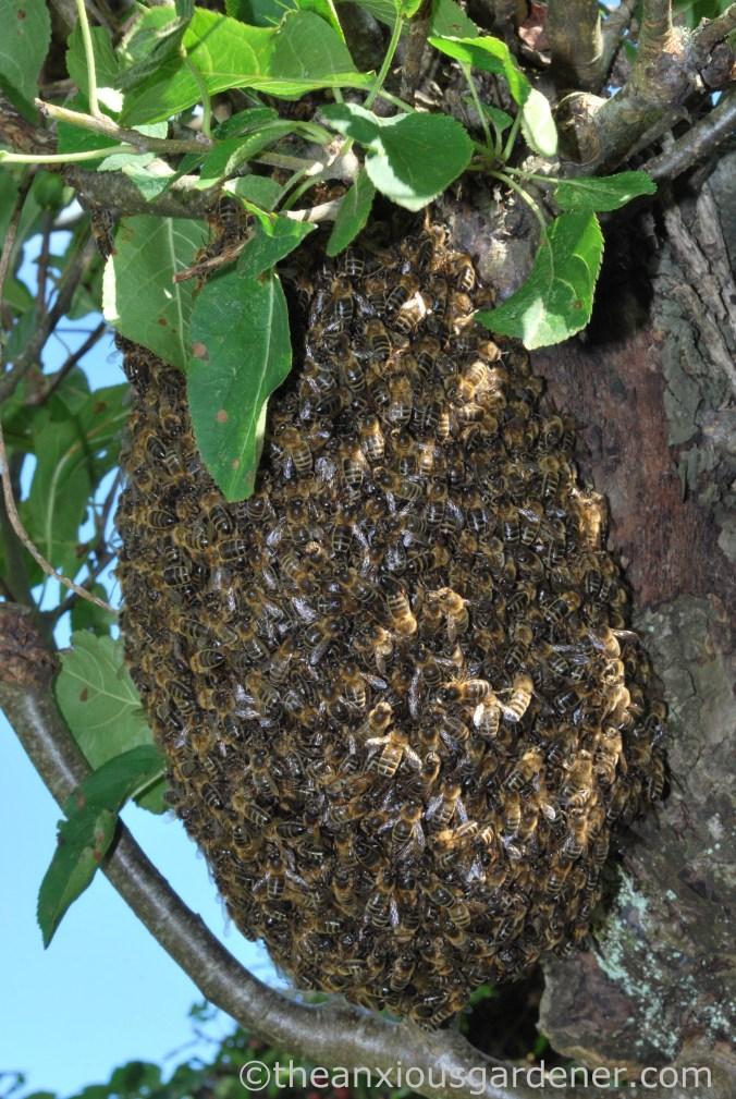 Bee Swarm (5)