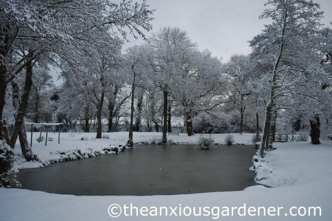 Frozen East Pond