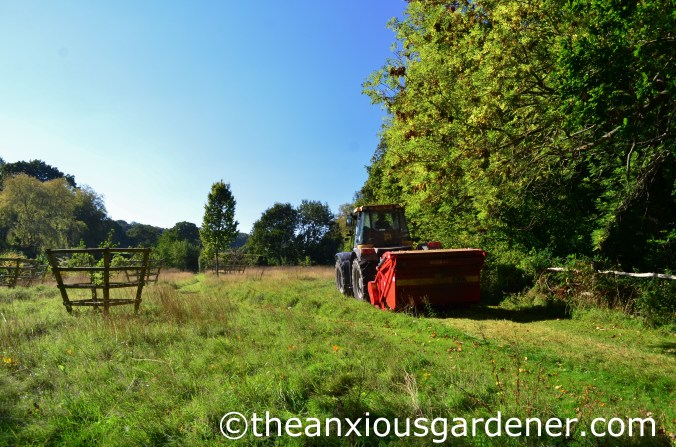 Meadow Cutting (3)
