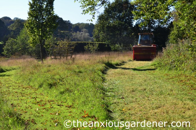 Meadow Cutting (4)
