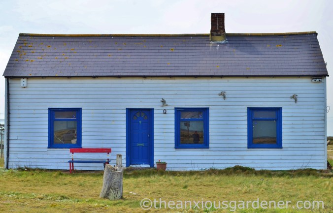 Dungeness (1)