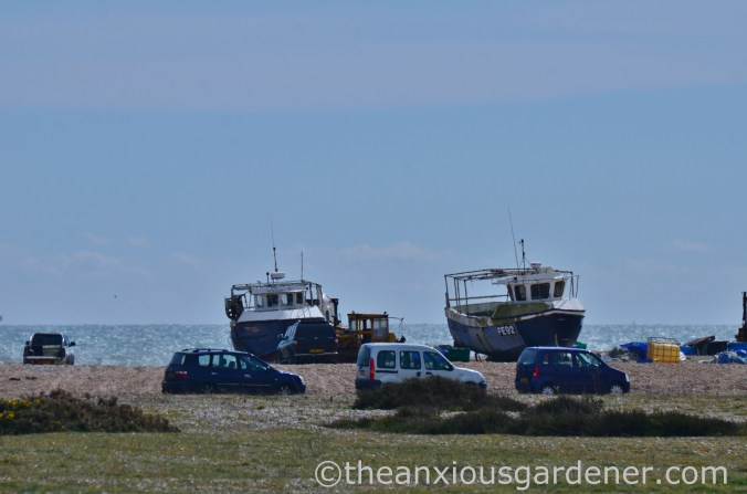 Dungeness (10)