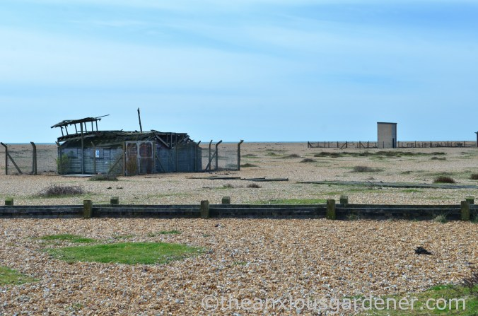 Dungeness (12)