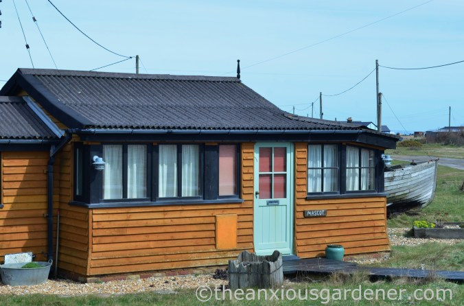 Dungeness (13)