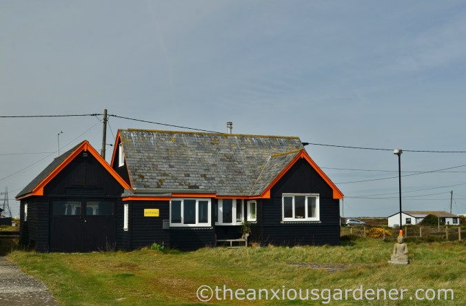 Dungeness (16)