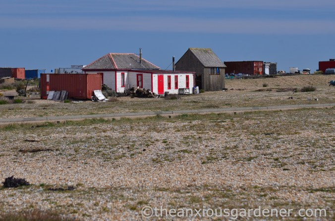 Dungeness (19)