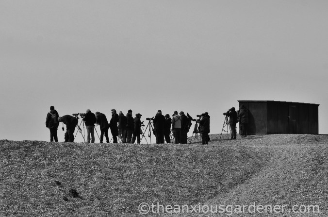 Dungeness (2)