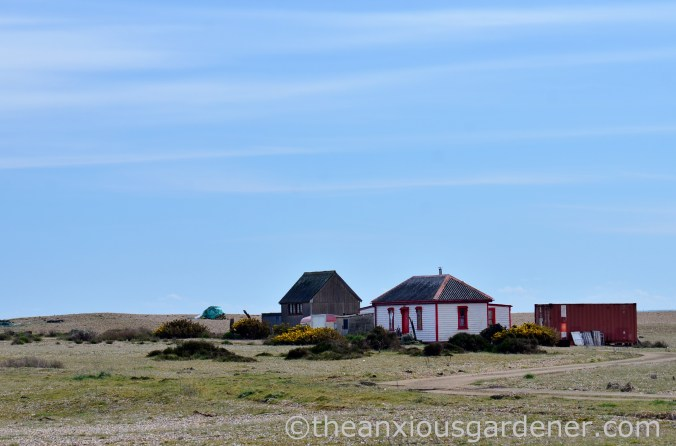 Dungeness (21)