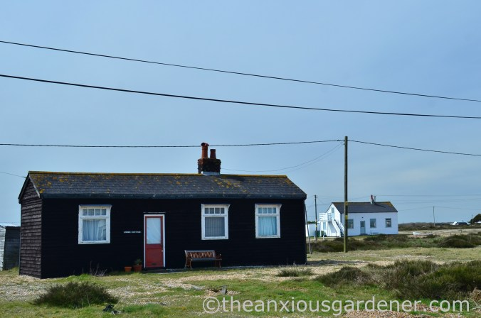 Dungeness (22)