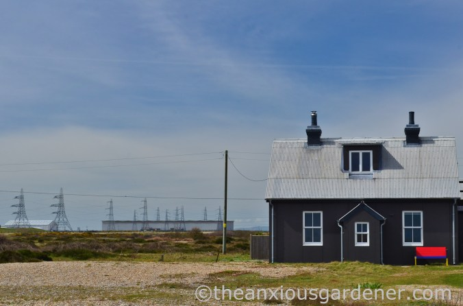 Dungeness (27)