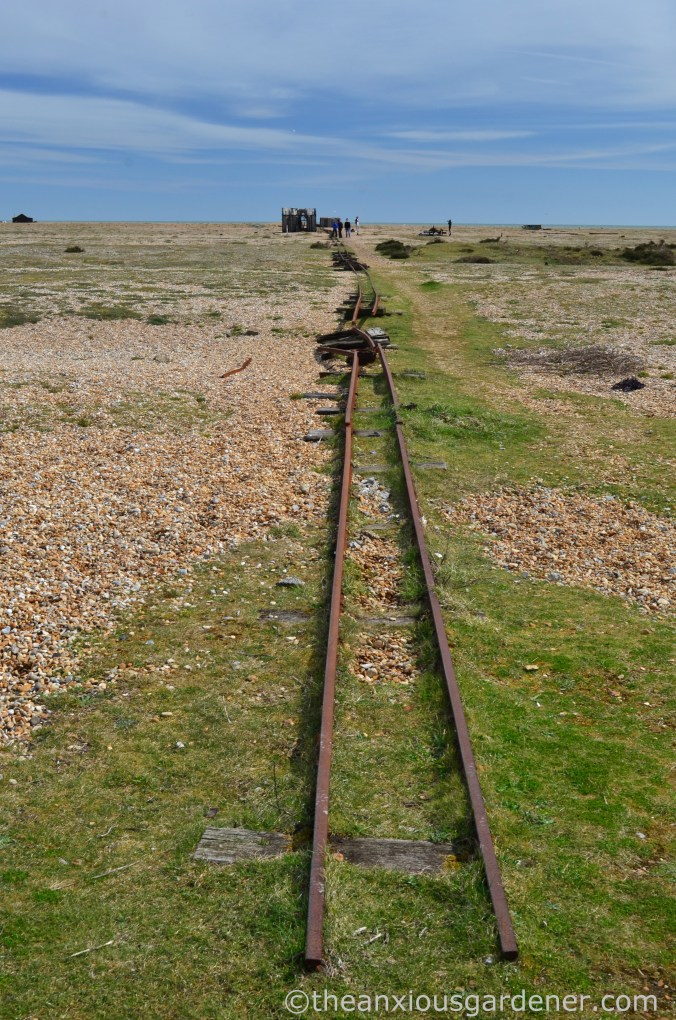 Dungeness (28)