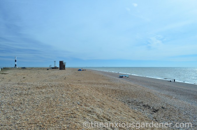 Dungeness (3)