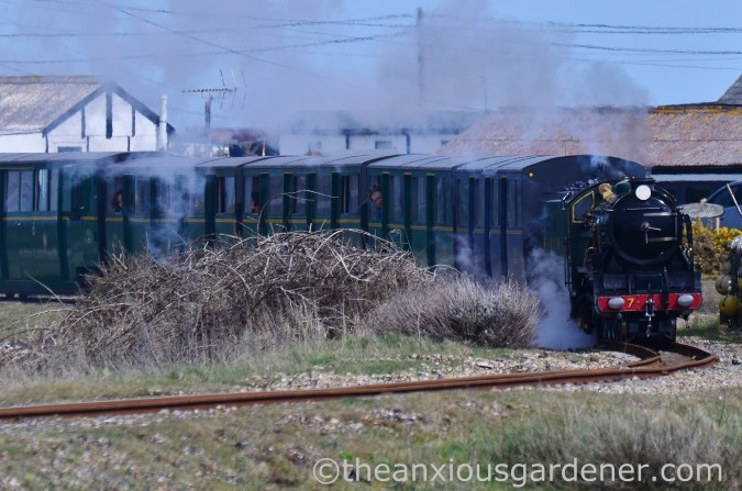 Dungeness (35)