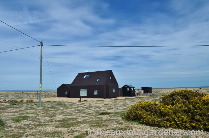 Dungeness (42)