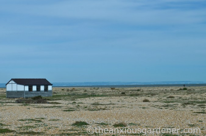 Dungeness (44)