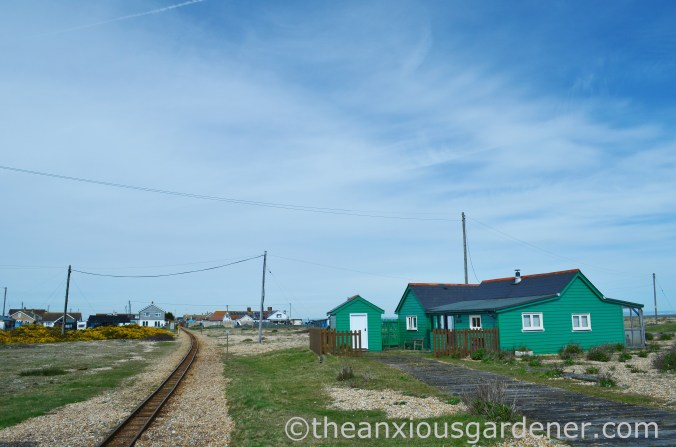 Dungeness (45)