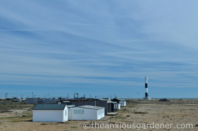 Dungeness (5)