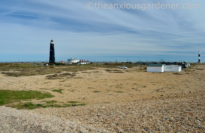 Dungeness (6)