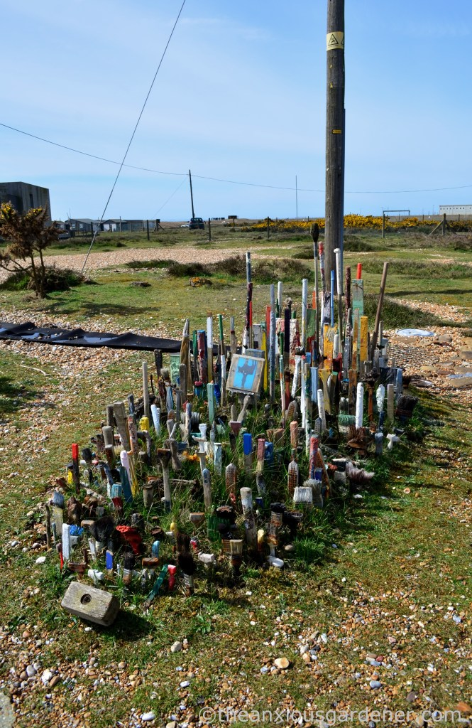 Dungeness (7)