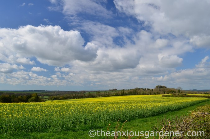 Rape Field, South Downs WAy