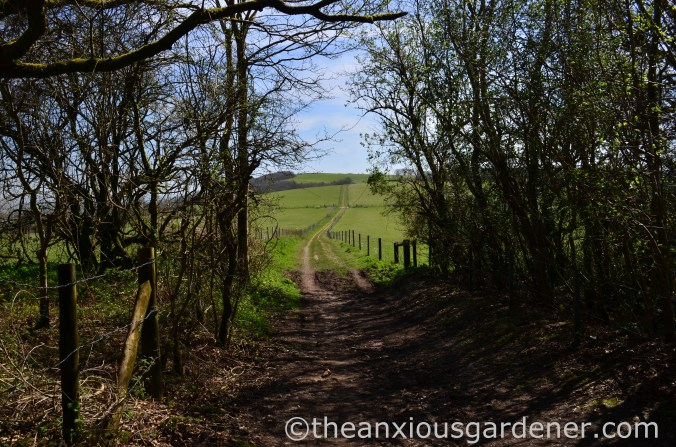 South Downs Way (1)