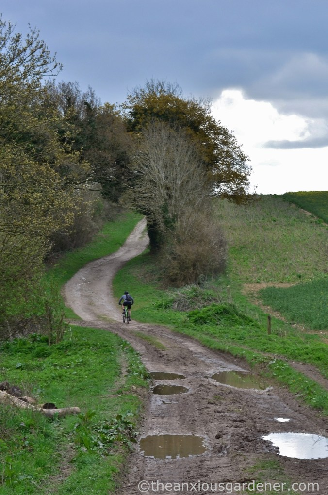 South Downs Way (15)