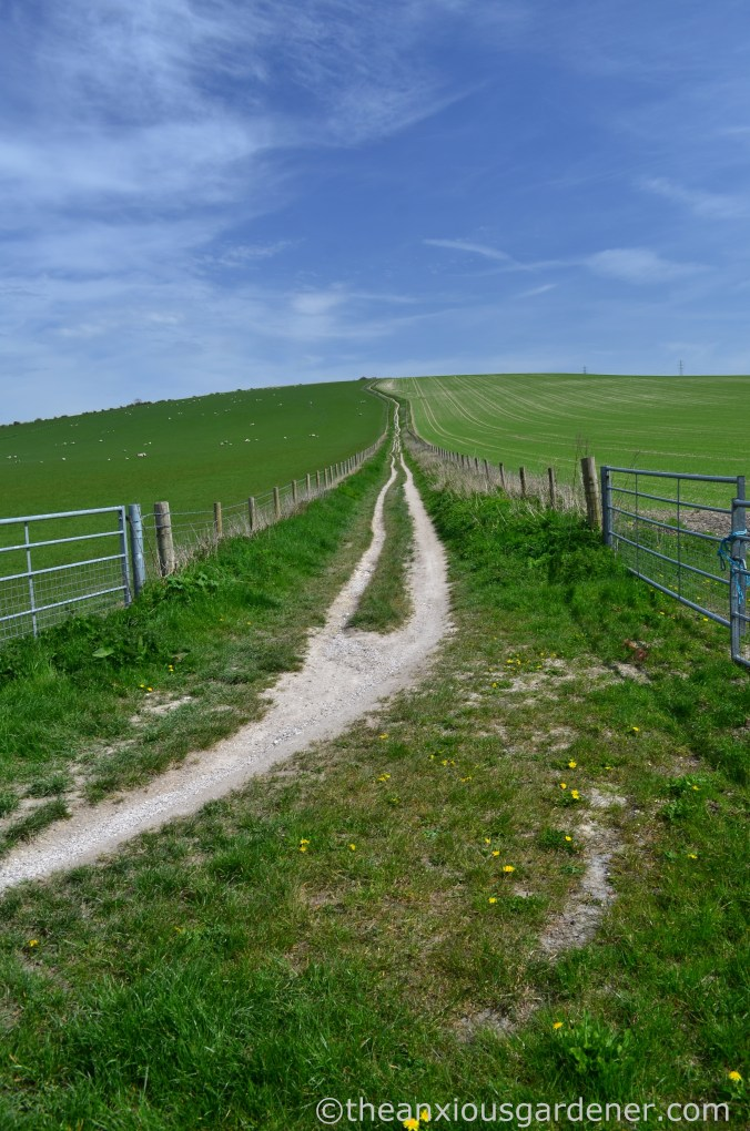 South Downs Way (9)