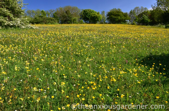 Flower Meadow South Downs (3)