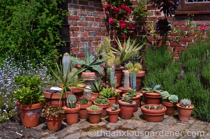 Cacti and succulents (2)