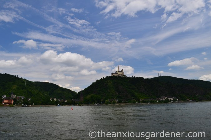 Cyclig along the Rhine (2)