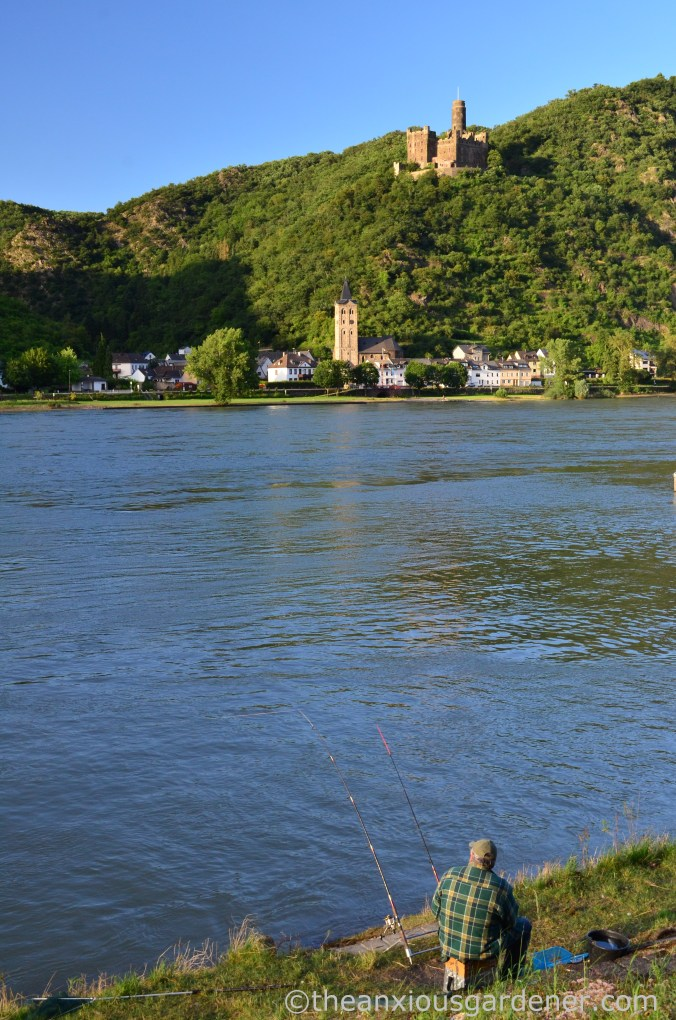 Cycling along the Rhine (12)