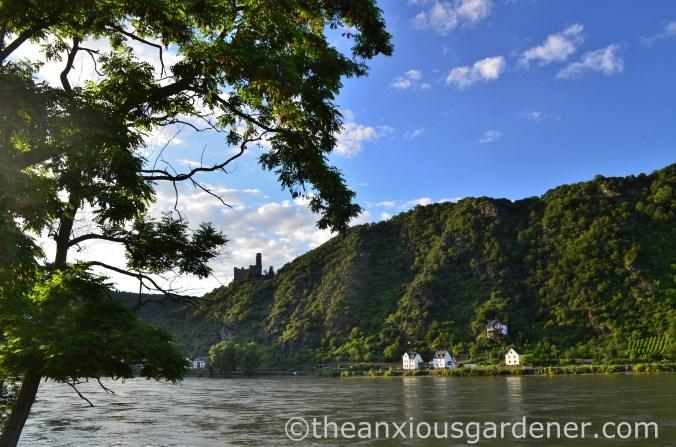 Cycling along the Rhine (15)