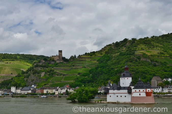 Cycling along the Rhine (7)