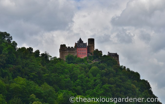 Cycling along the Rhine (9)